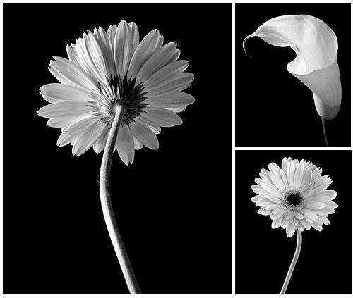 Jennifer Squires - Floral