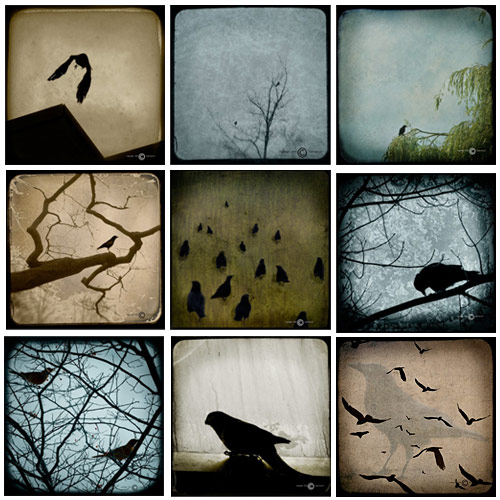 Ketsel Photography - Bird  Series