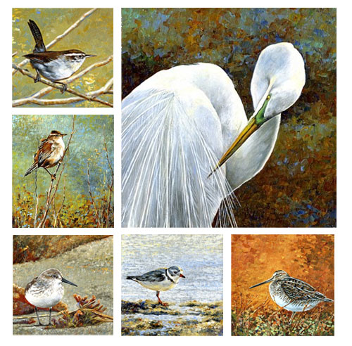 Pam Lewis - Birds of Sonoma County