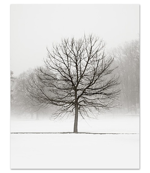Winter Marches On :  art photography black and white landscape